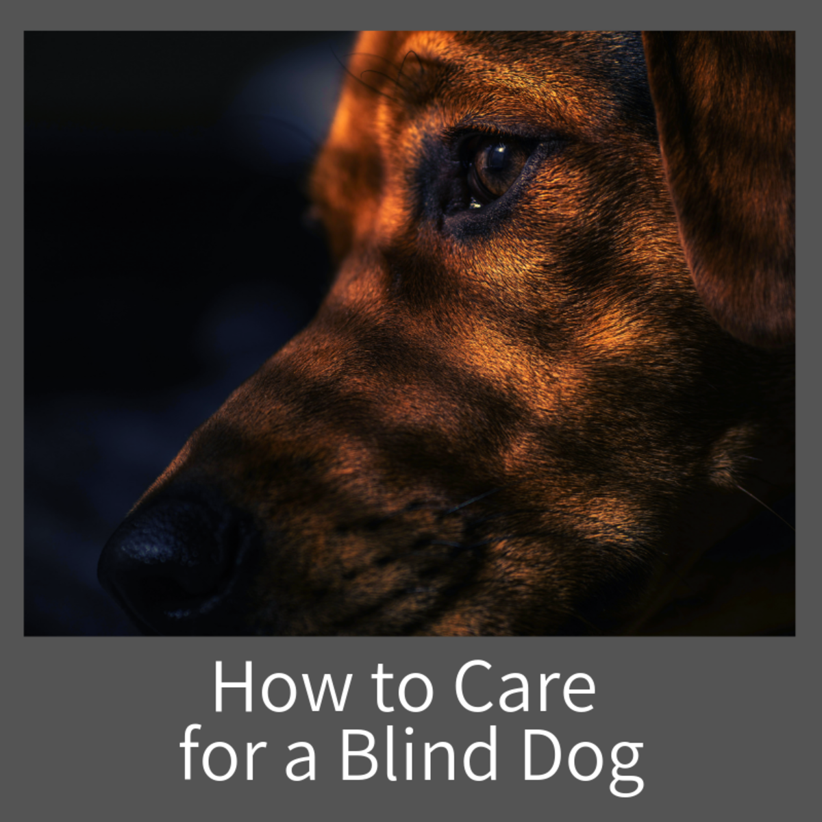 Learn how what signs to look for, and how to care for your blind dog.
