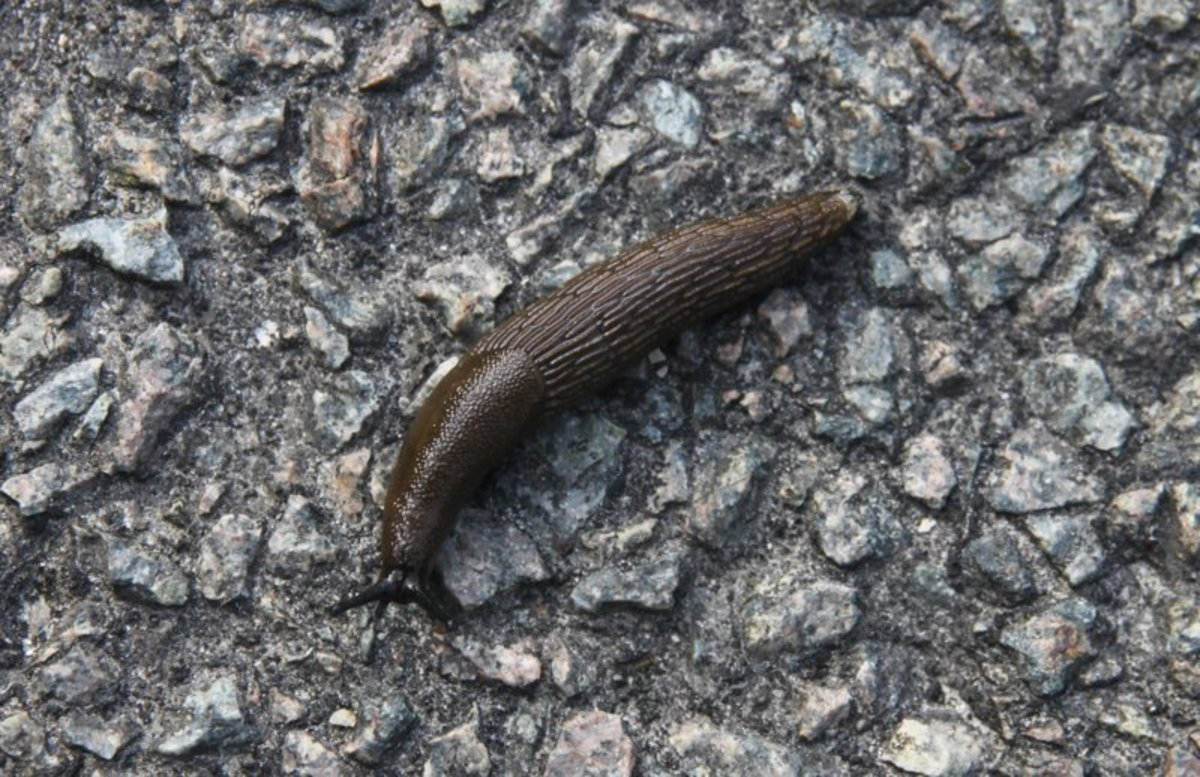 how-to-get-rid-of-slugs-in-your-house