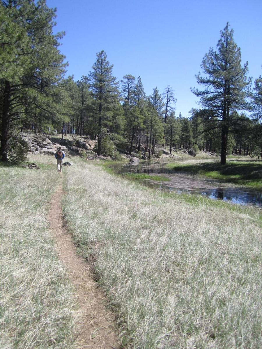 The best short day hikes in flagstaff arizona wanderwisdom solutioingenieria Gallery