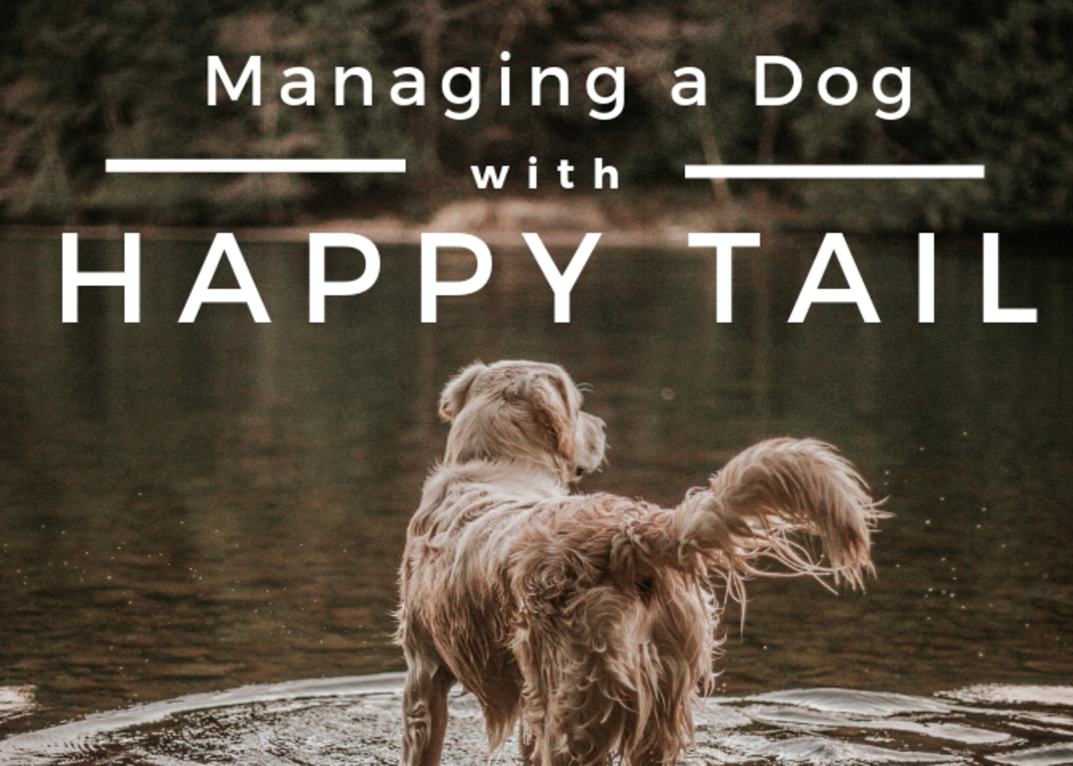 Managing Happy Tail in Dogs