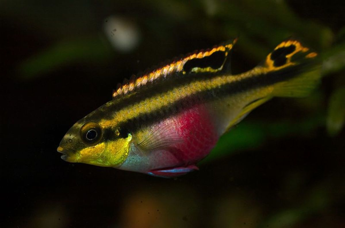 The Best and Worst Beginner Fish for Your Aquarium