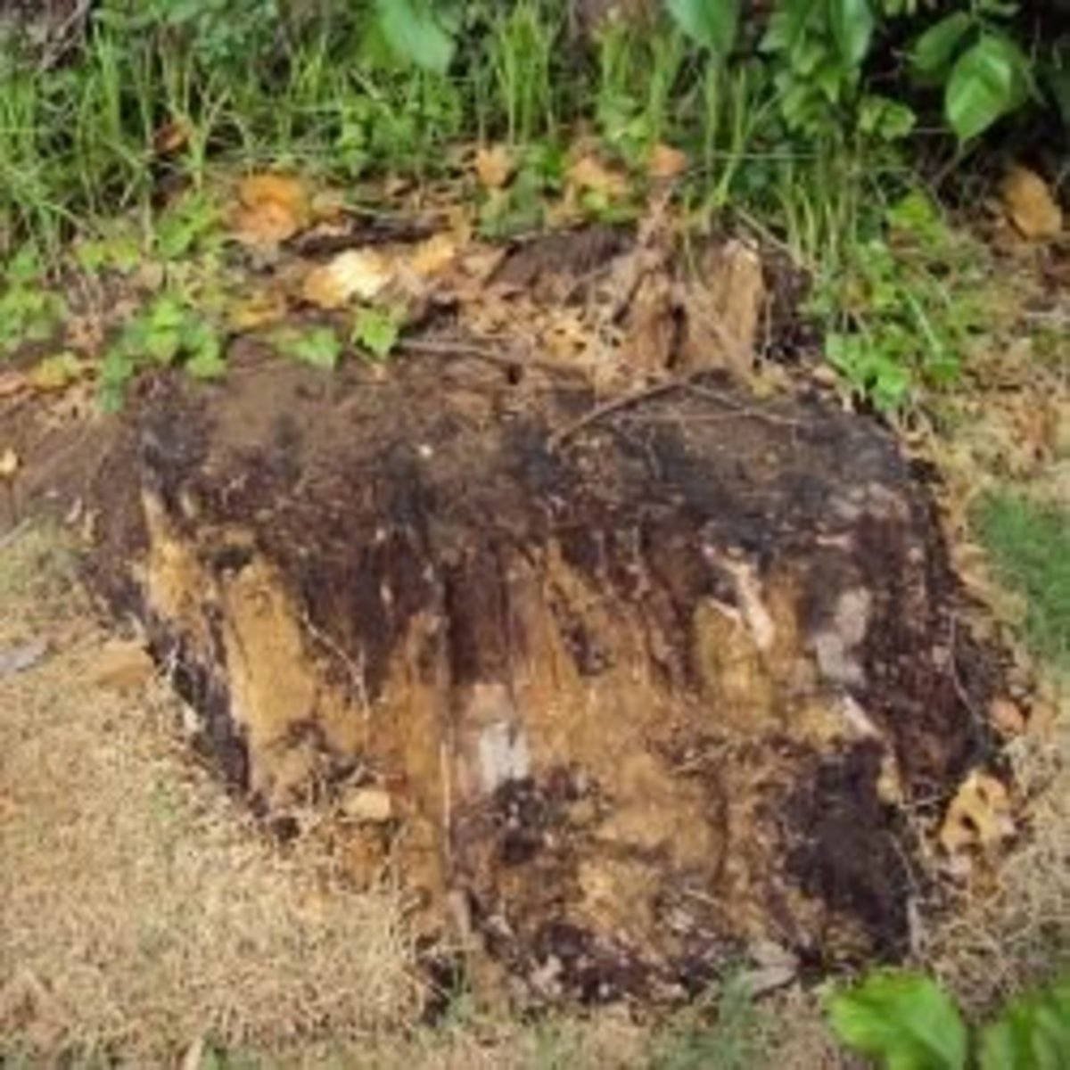 Tree Stump Removal The Lazy Way