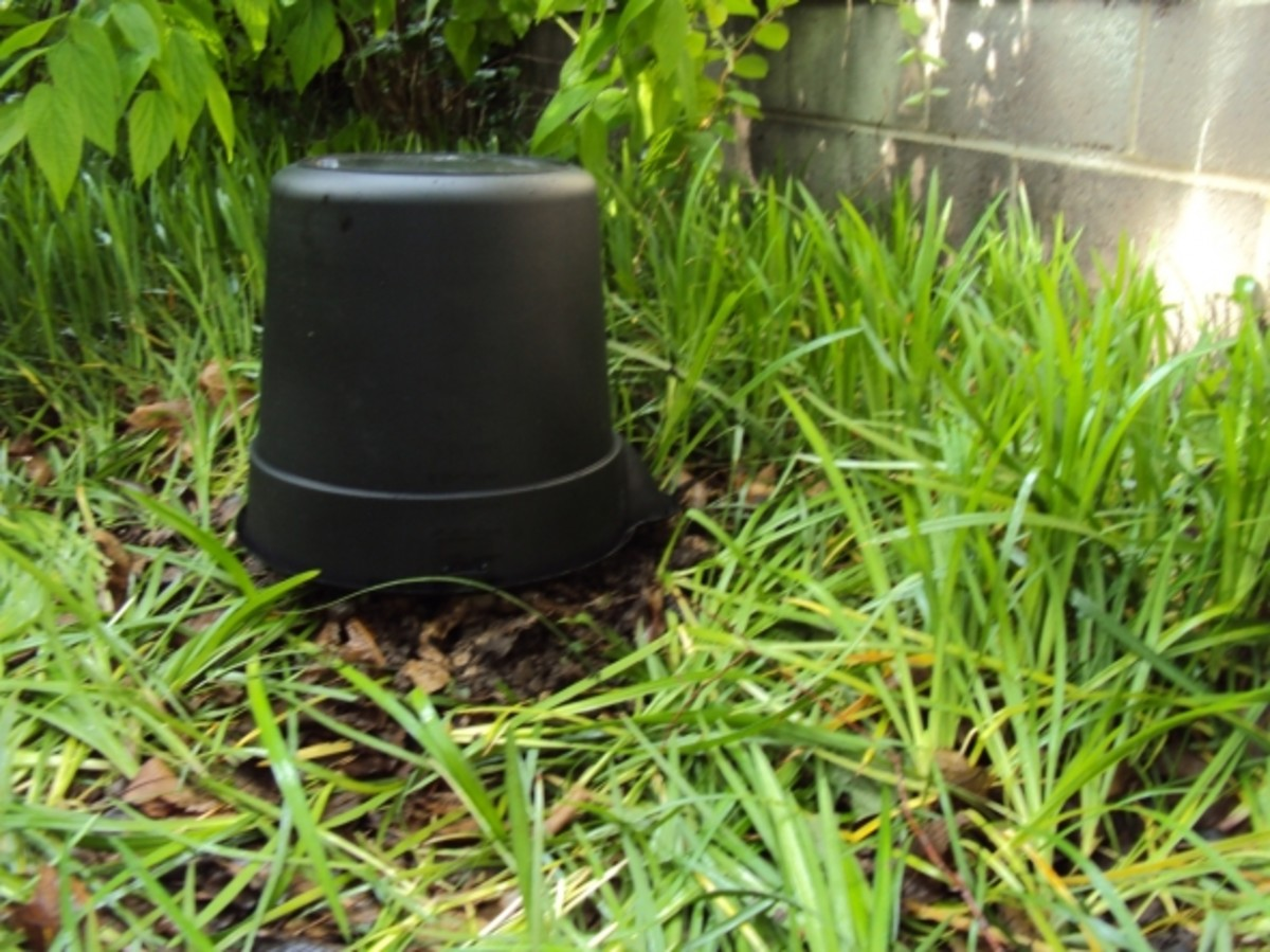 Stump covered with bucket (side view)