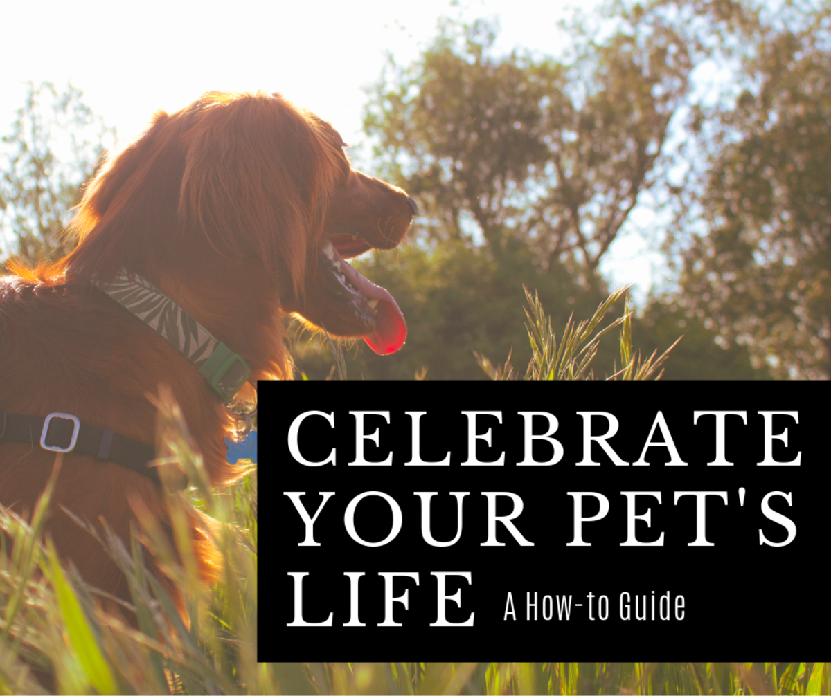 When a beloved pet passes away, it is important to celebrate their life. Here's how you can do that using a Wiccan ritual.