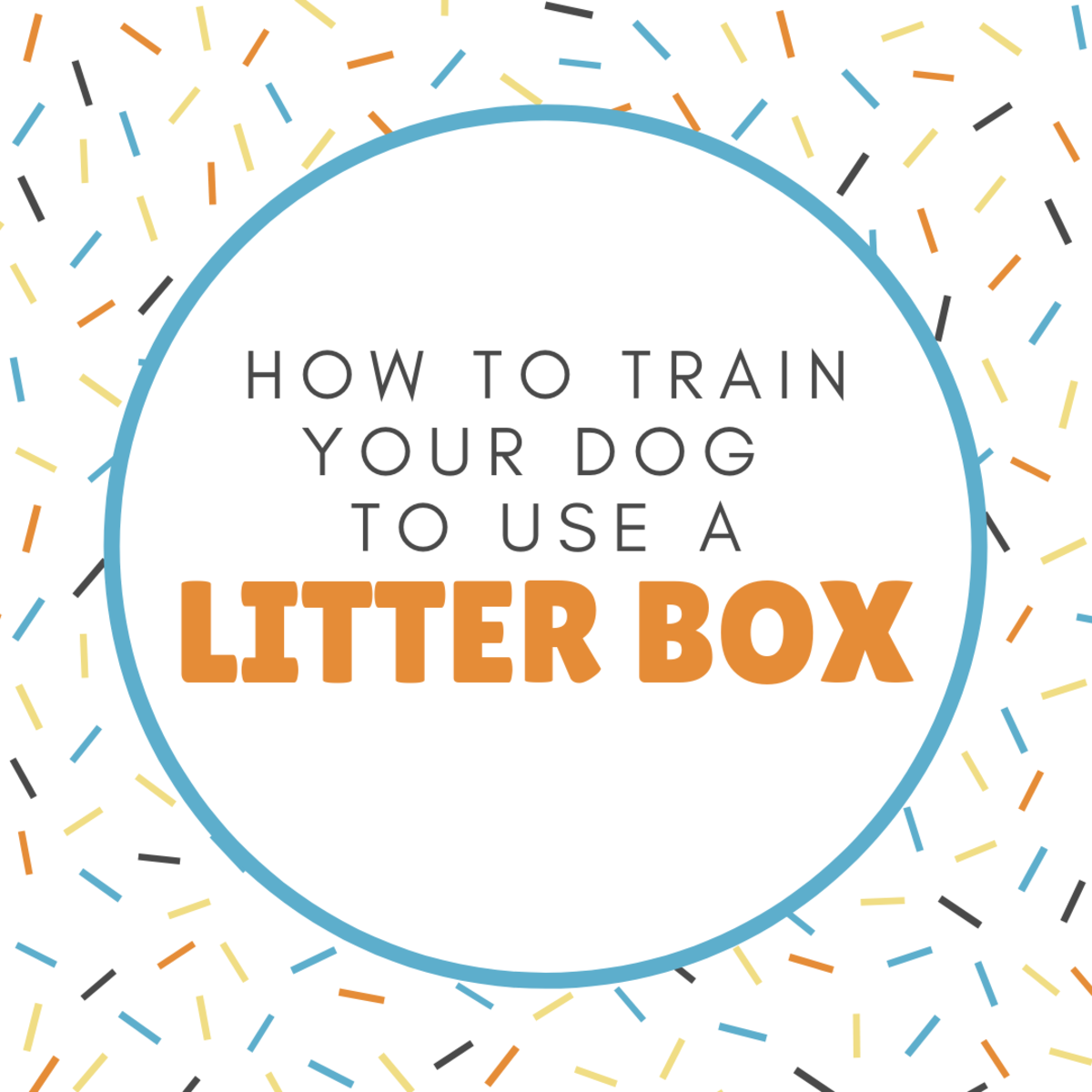 Train Your Dog to Use a Litter Box