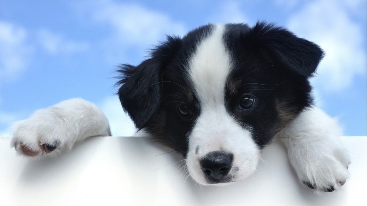 How to Effectively Develop Your Puppy's Behaviour Through Training