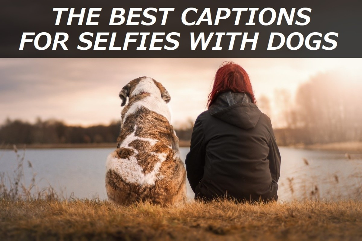 100+ Best Captions for Selfies With Dogs