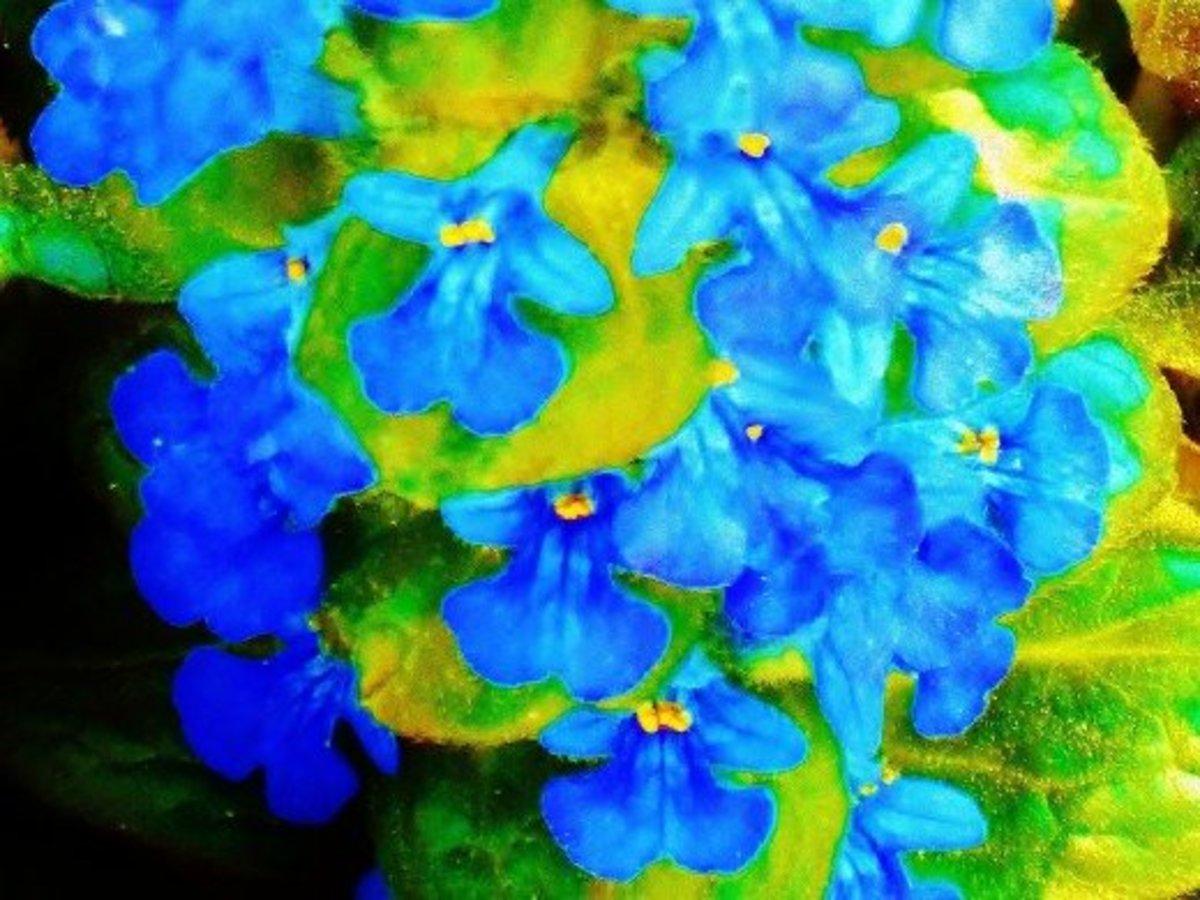 Photo editing fun...This ajuga closeup almost looks like a watercolor!