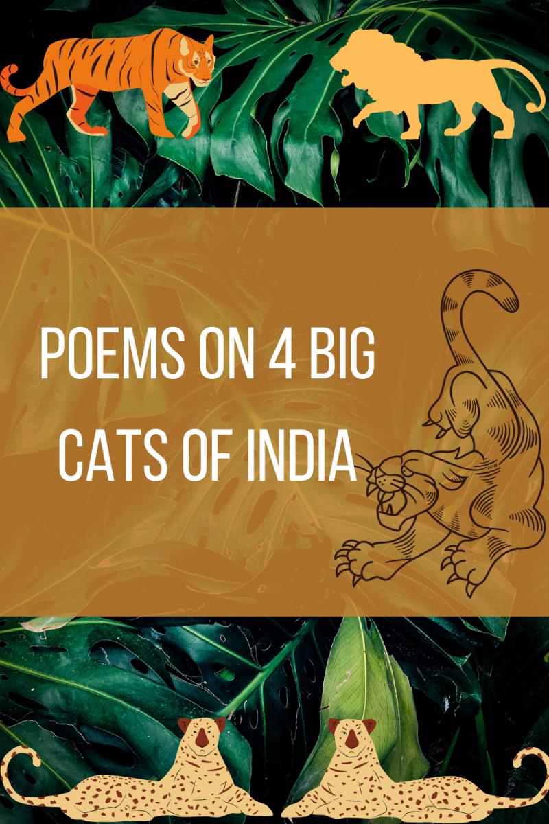 big-cats-of-india