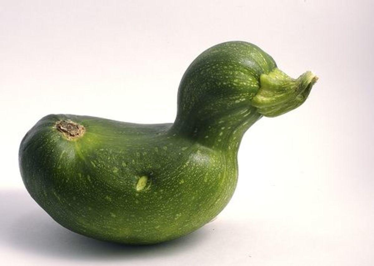 Zucchini duck.