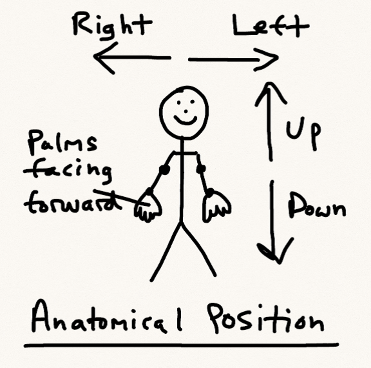 Anatomical Position schematic
