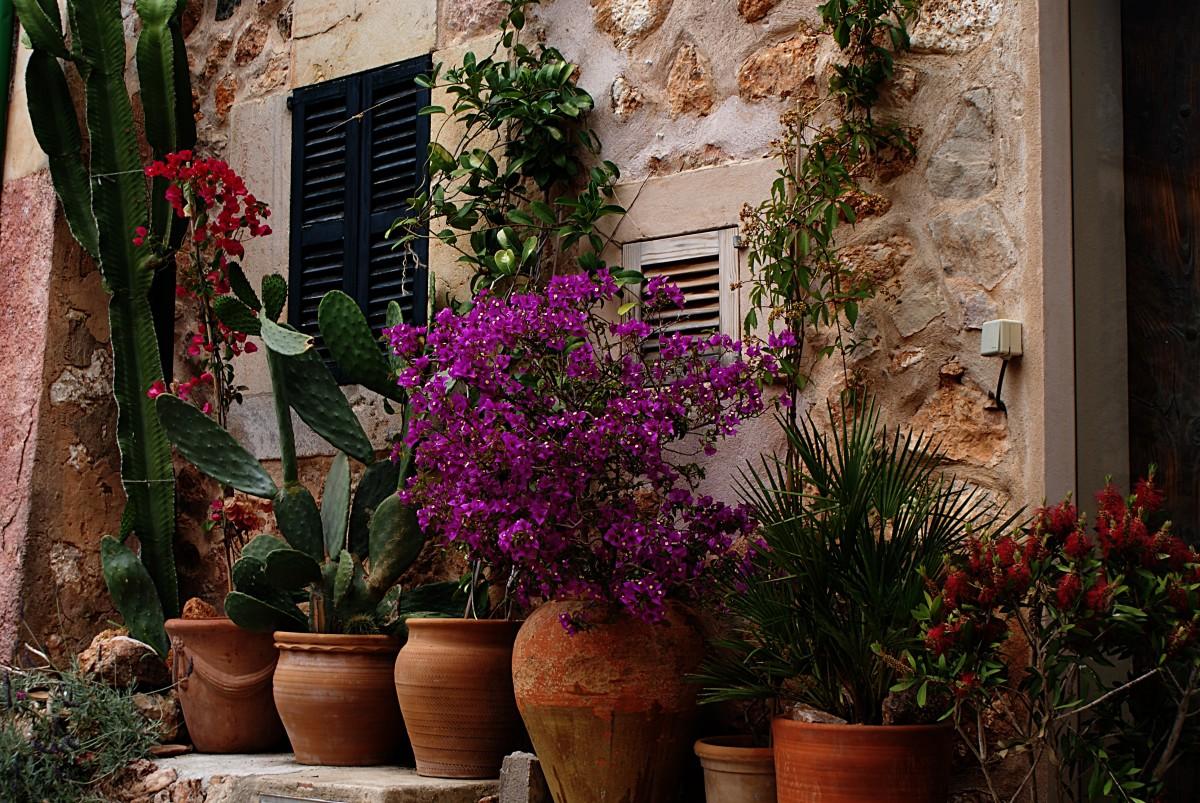 Beautiful flowers in outdoor pots