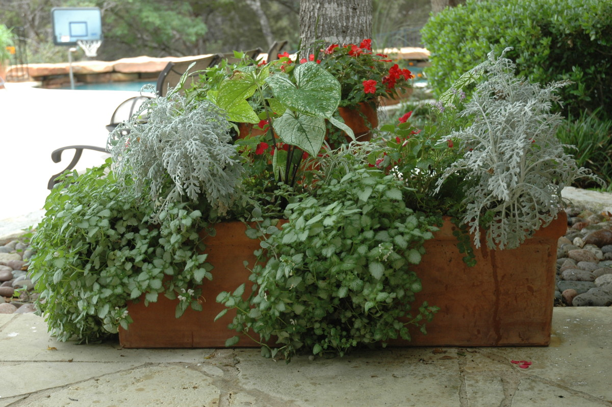 Large rectangular box of greenery