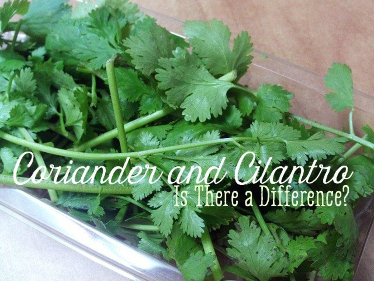 The plant above is known as coriander to some people and cilantro to others.