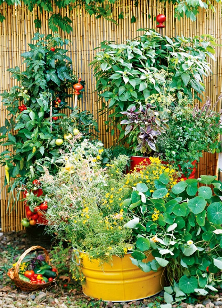 A good example of a small space container garden.