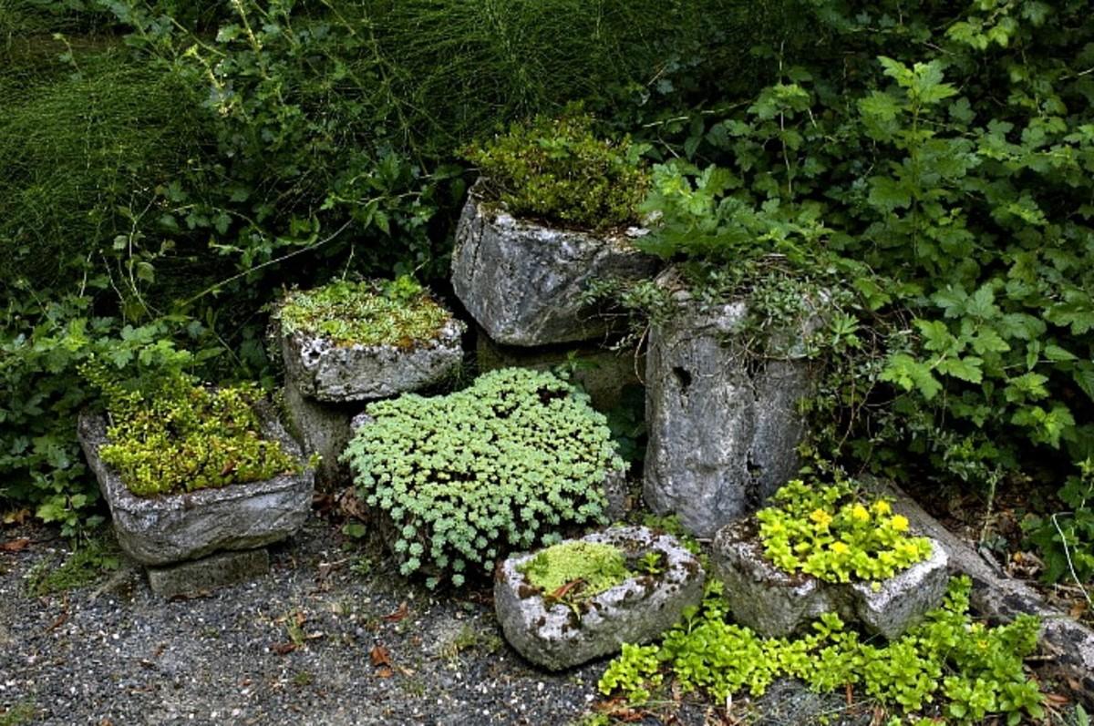 Hypertufa Planter Garden