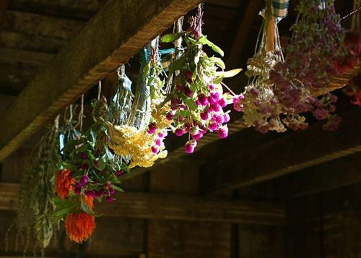 Air drying roses.