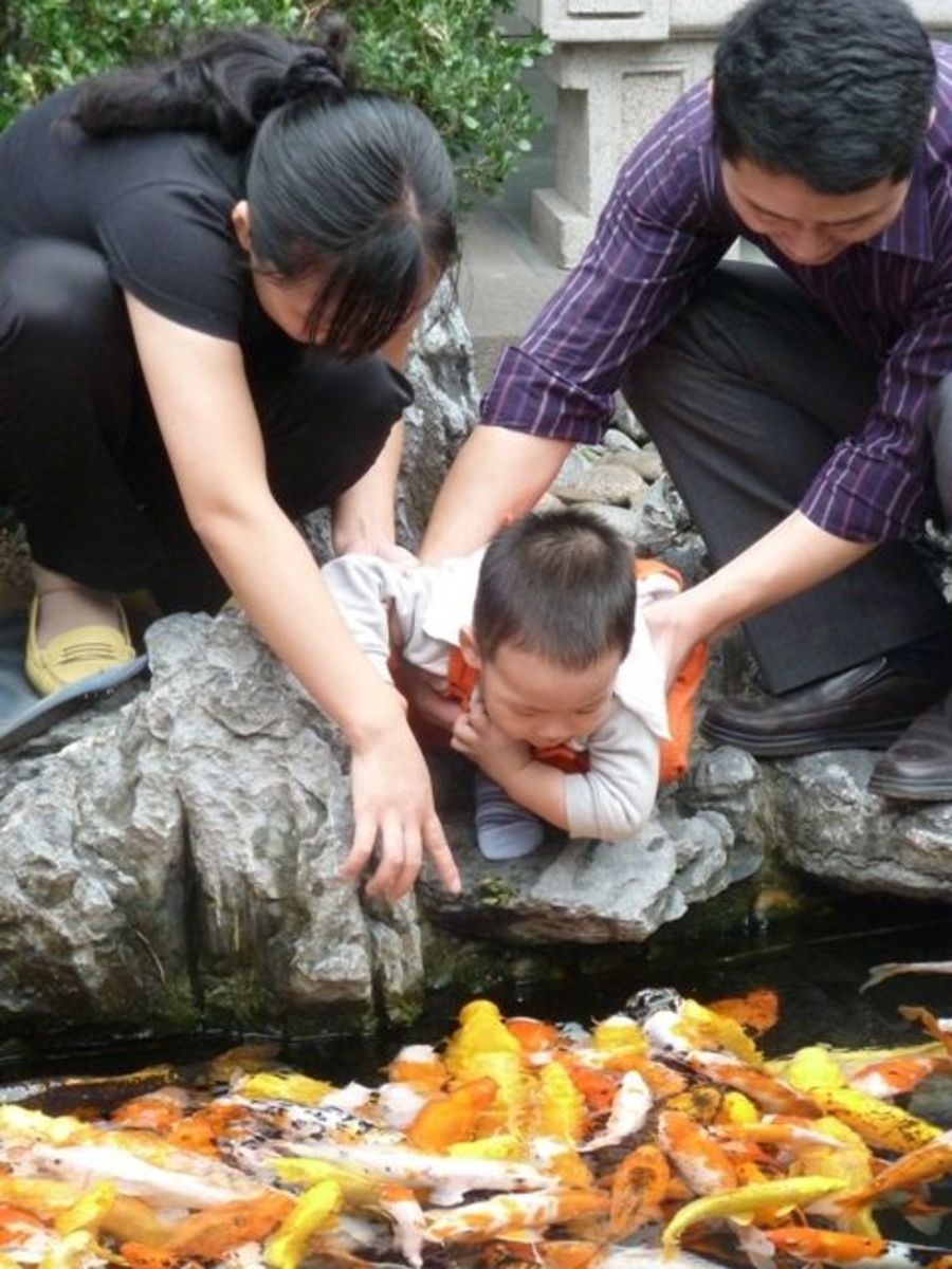 A young child watches in fascination as golden carp swim around, with flashes of light in the deep water.