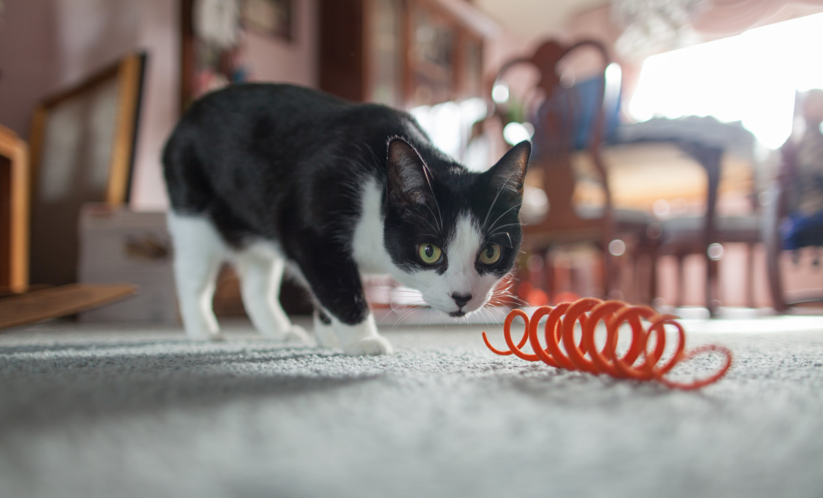 Making a toy for your cat can be as simple as coiling a piece of rubber-coated wire into a spring shape. Make sure there are no sharp ends!