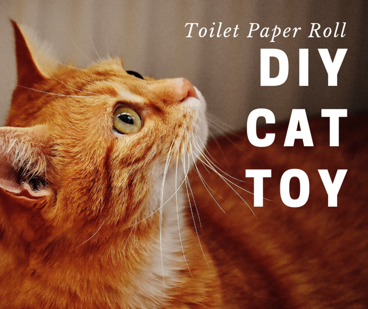DIY Cat Toy Using a Toilet Paper Tube