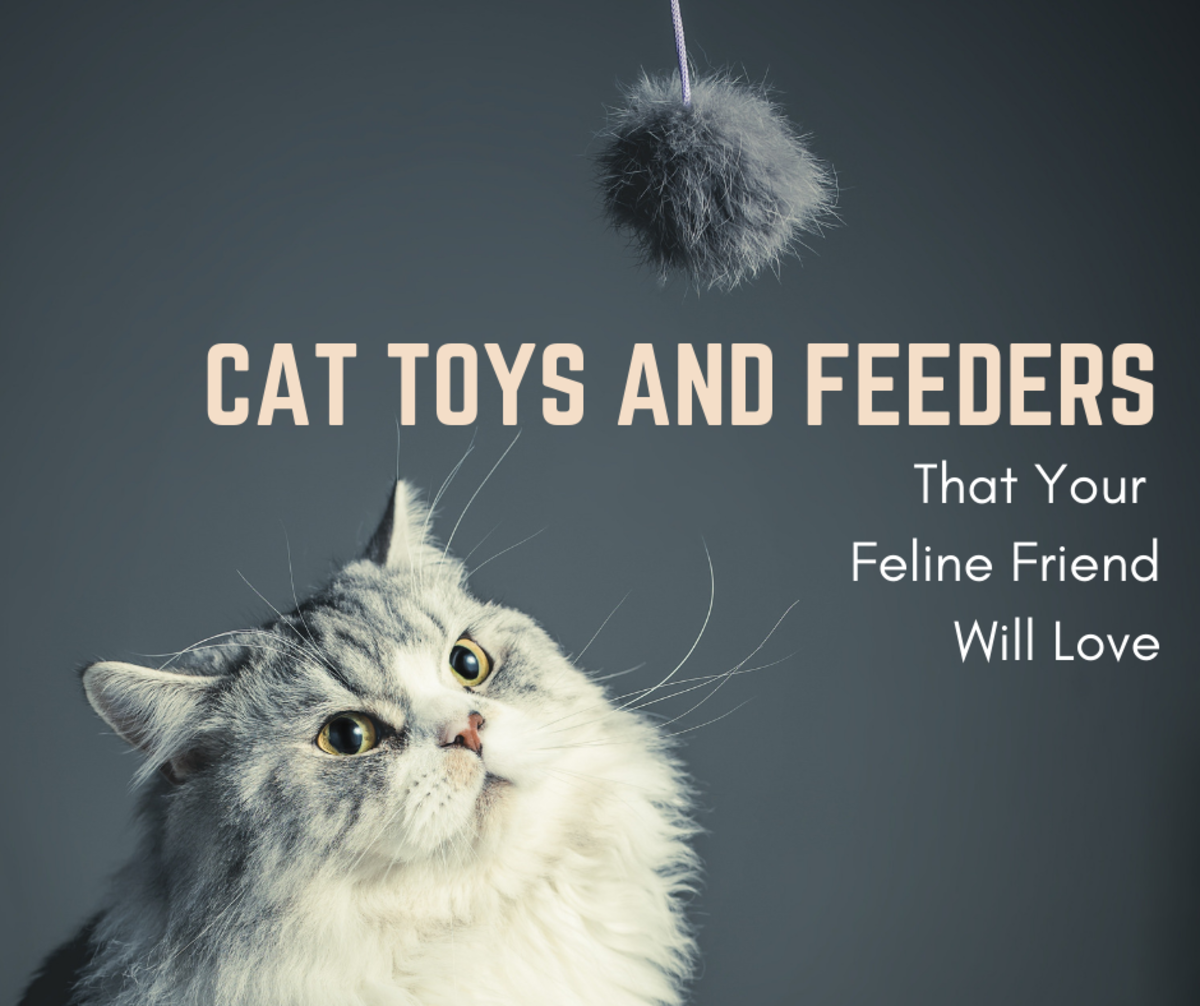 Keeping your cats entertained will assure that they are happy and healthy.