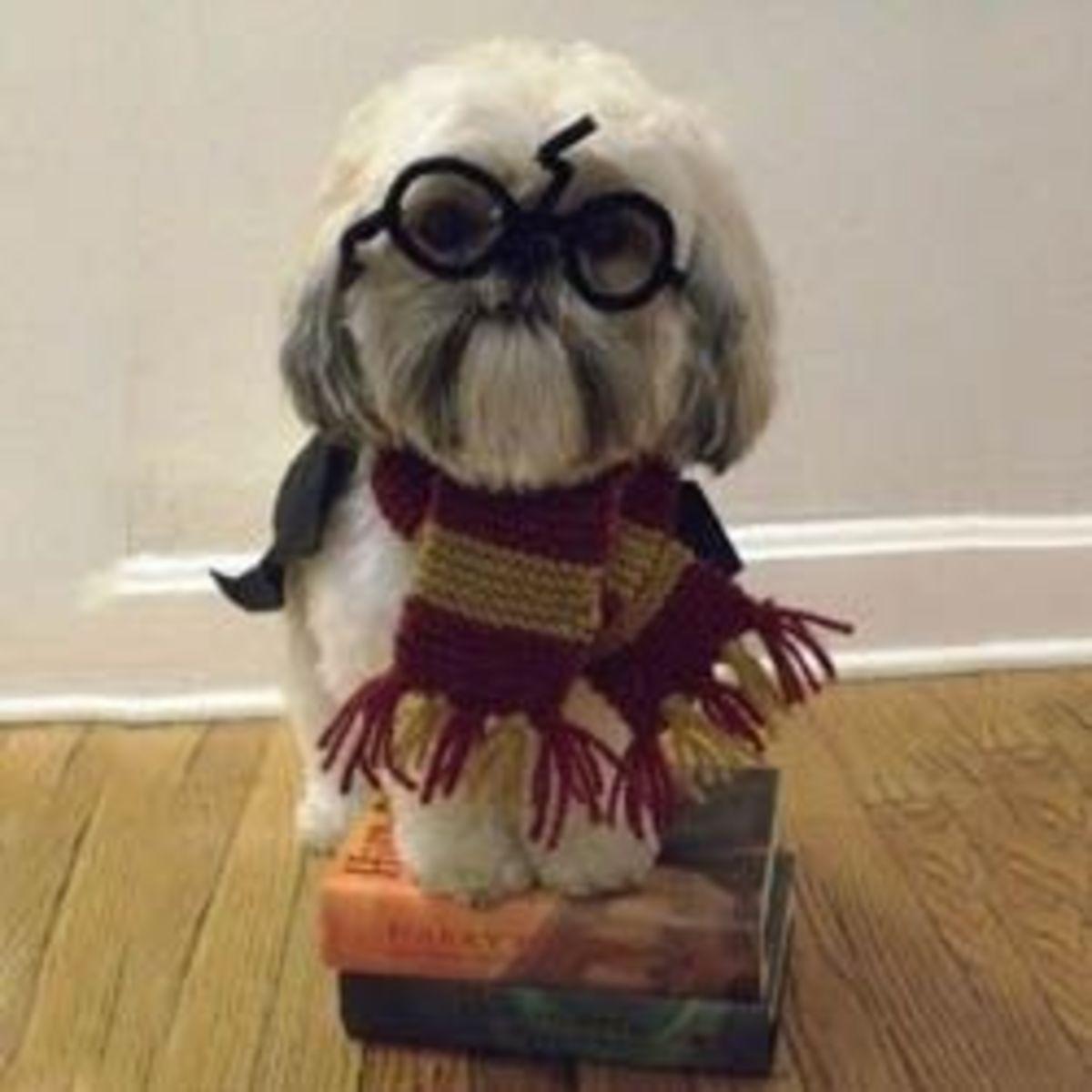 Harry Potter Meets Lolcatz
