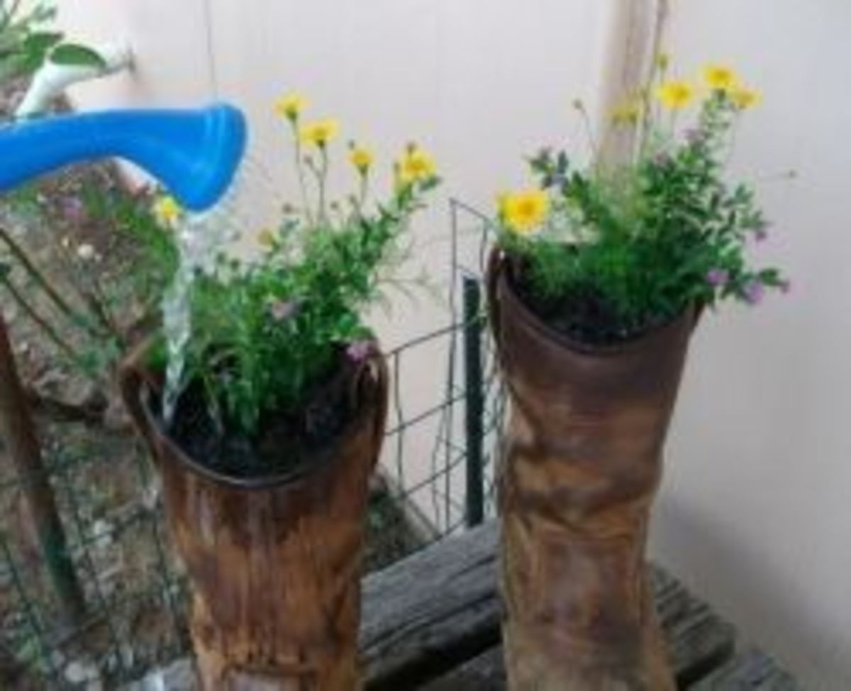 Watering my boot planters