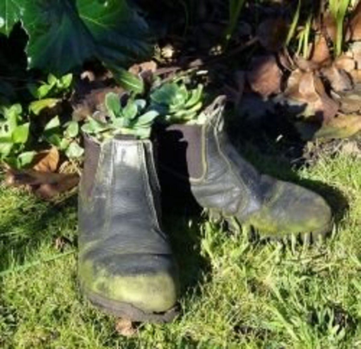Old boots used as flower planters