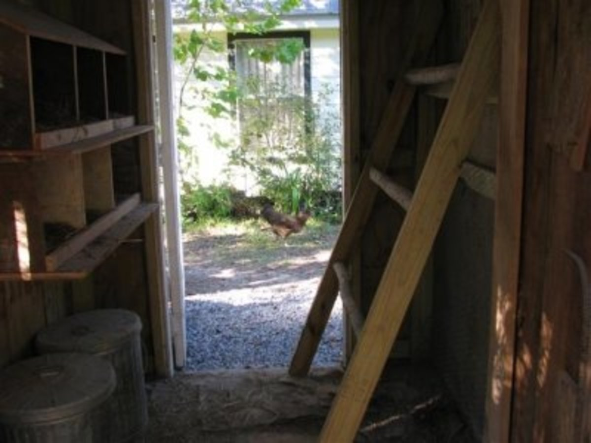 The roost can be moved up or taken out for cleaning.