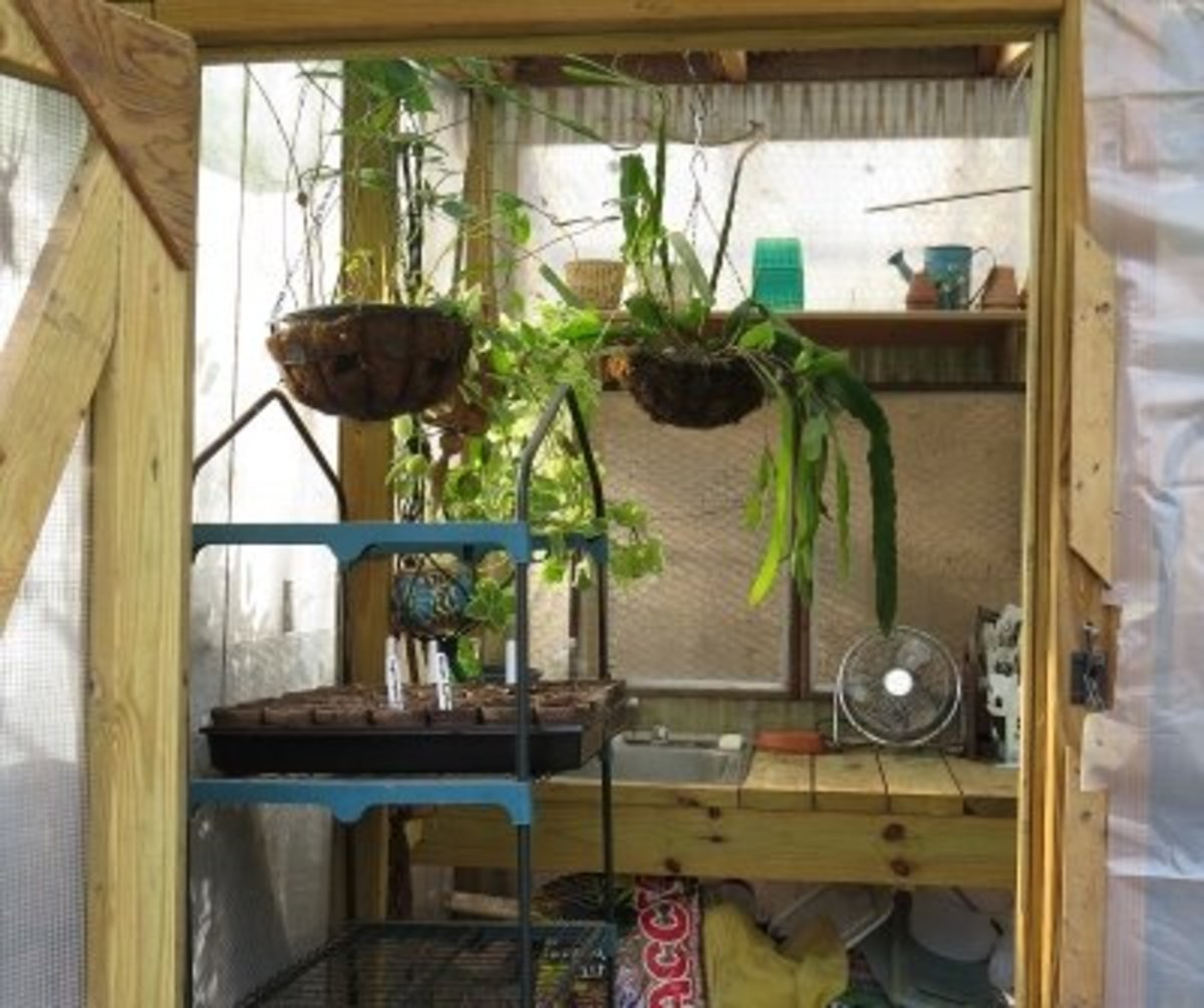 Back door of greenhouse showing plant stands & sink/work bench.