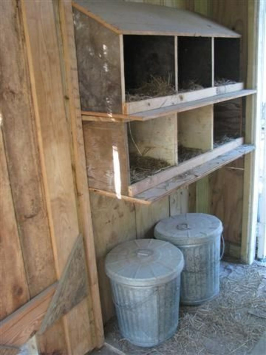 Hen Nest Boxes and Food Cans
