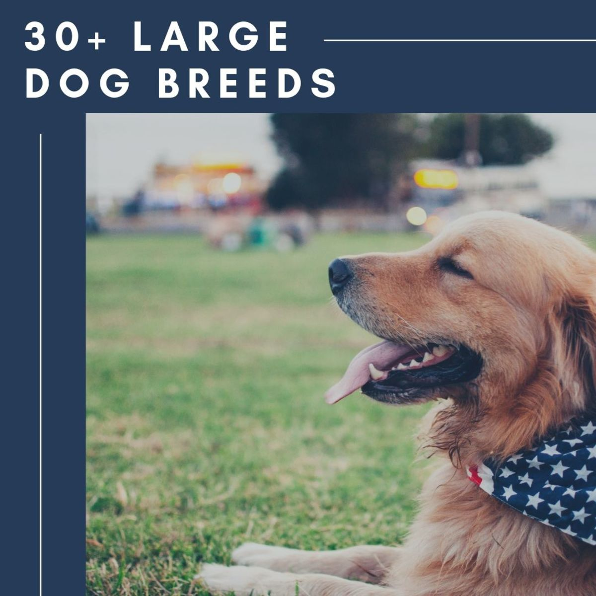 33 Most Popular Large Dog Breeds and How to Care for Them