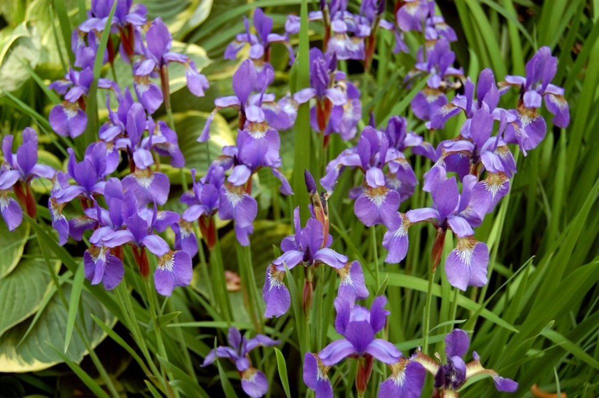 10 Best Perennial Plants for Anyone's Garden