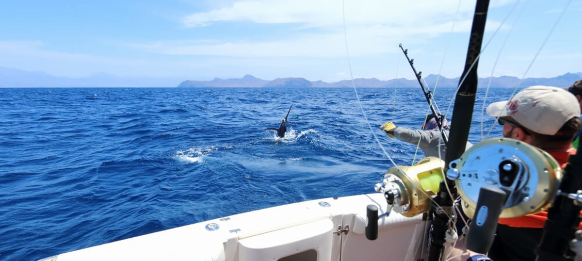 Big Blue 101: The Beginner's Essential Guide to Deep Sea Fishing