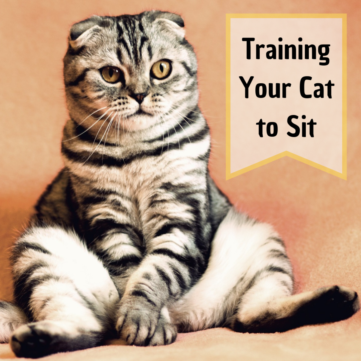 Cat Training: How to Teach Your Cat to Sit