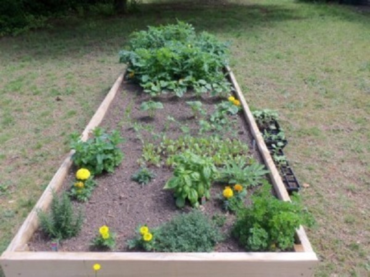 Use 2 feet of soil in a raised bed garden.