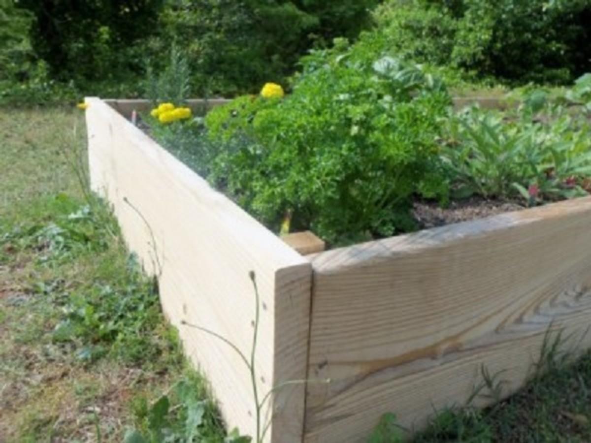 Raised beds eliminate digging in hardened soil.