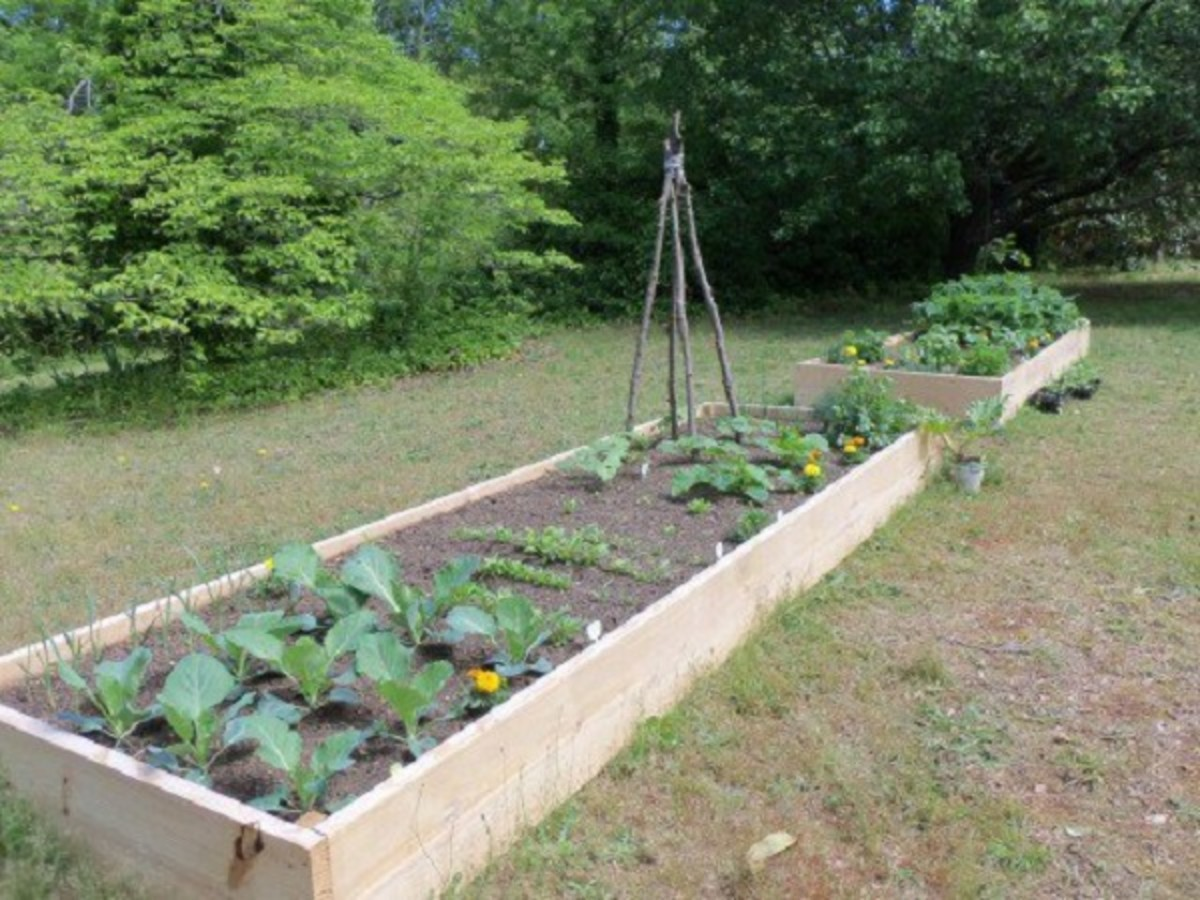 How to Make a Raised Bed Lasagna Garden