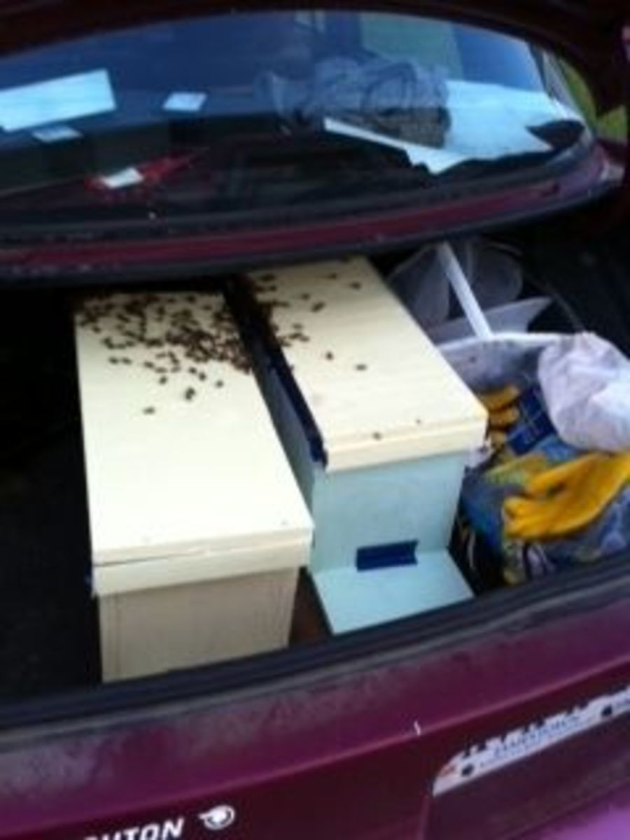 Safely Transporting Bee Hives in Your Car