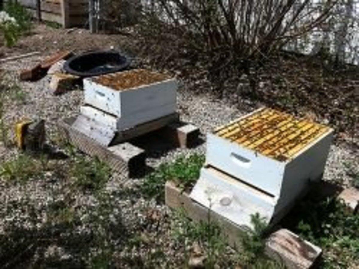 Splitting Bee Hives