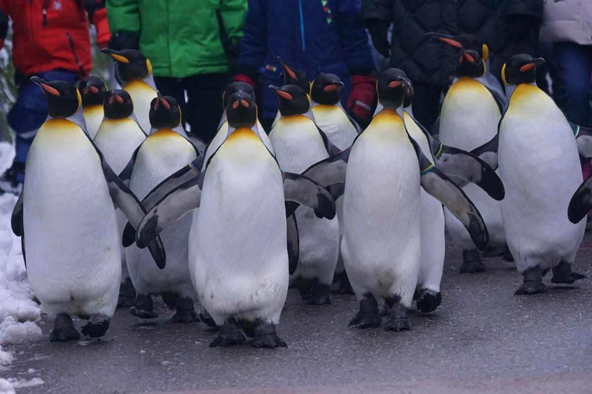 Fun Penguin Day Activities for Kids