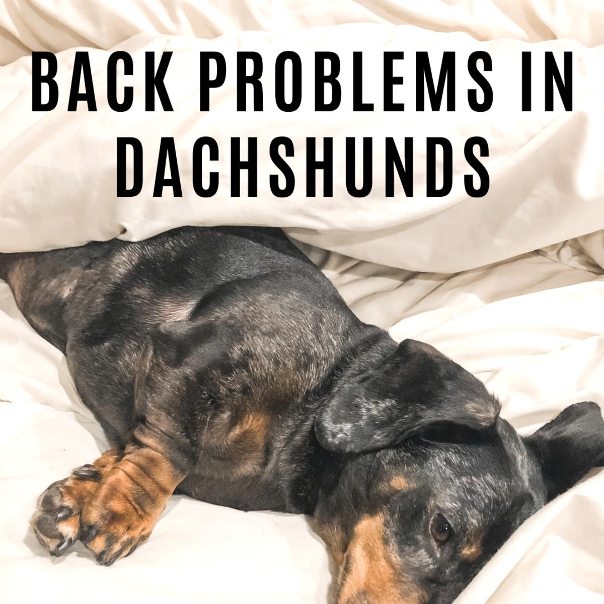 Dachshund Back Problems