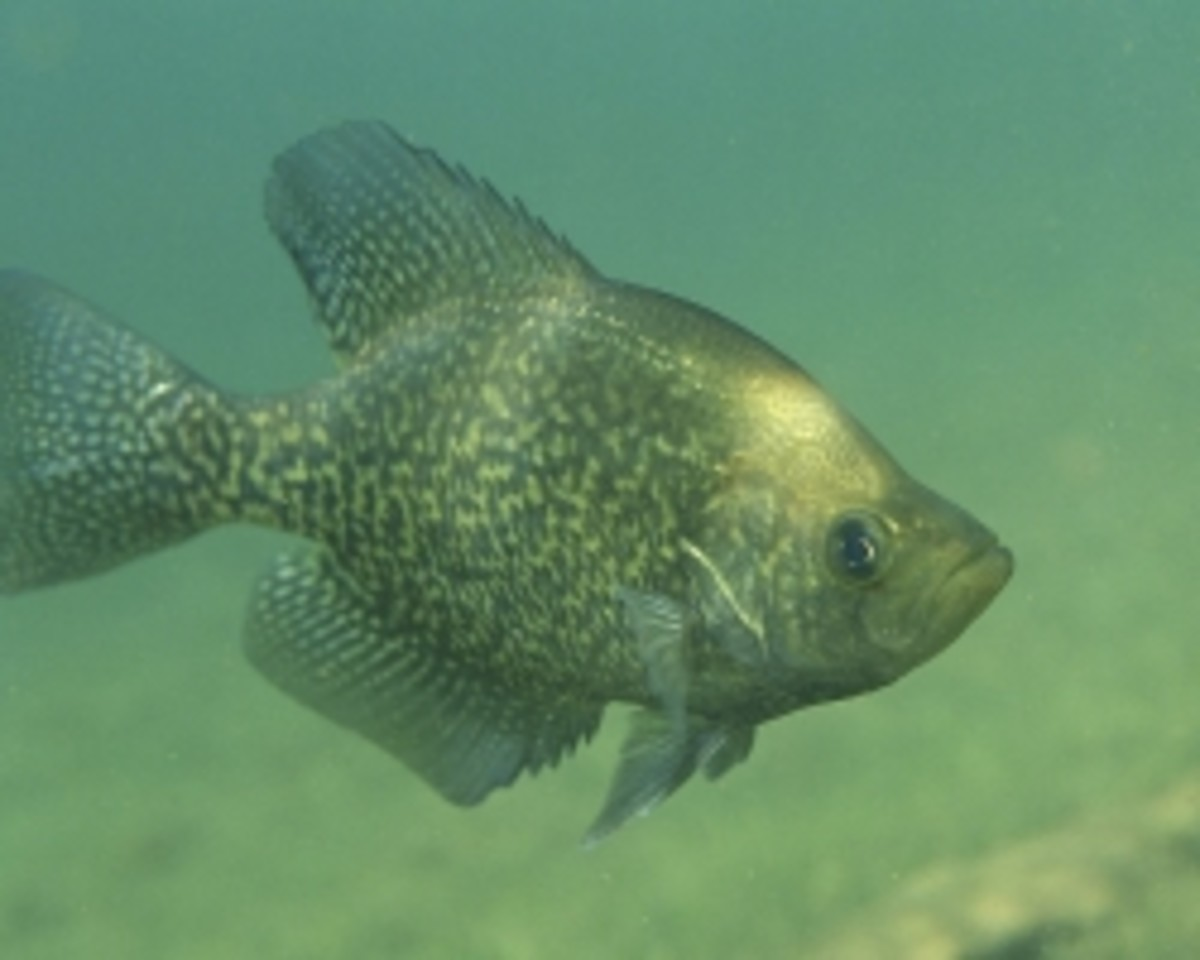 Seven Of The Best Lakes In Texas For Crappie Fishing & A Few Tips