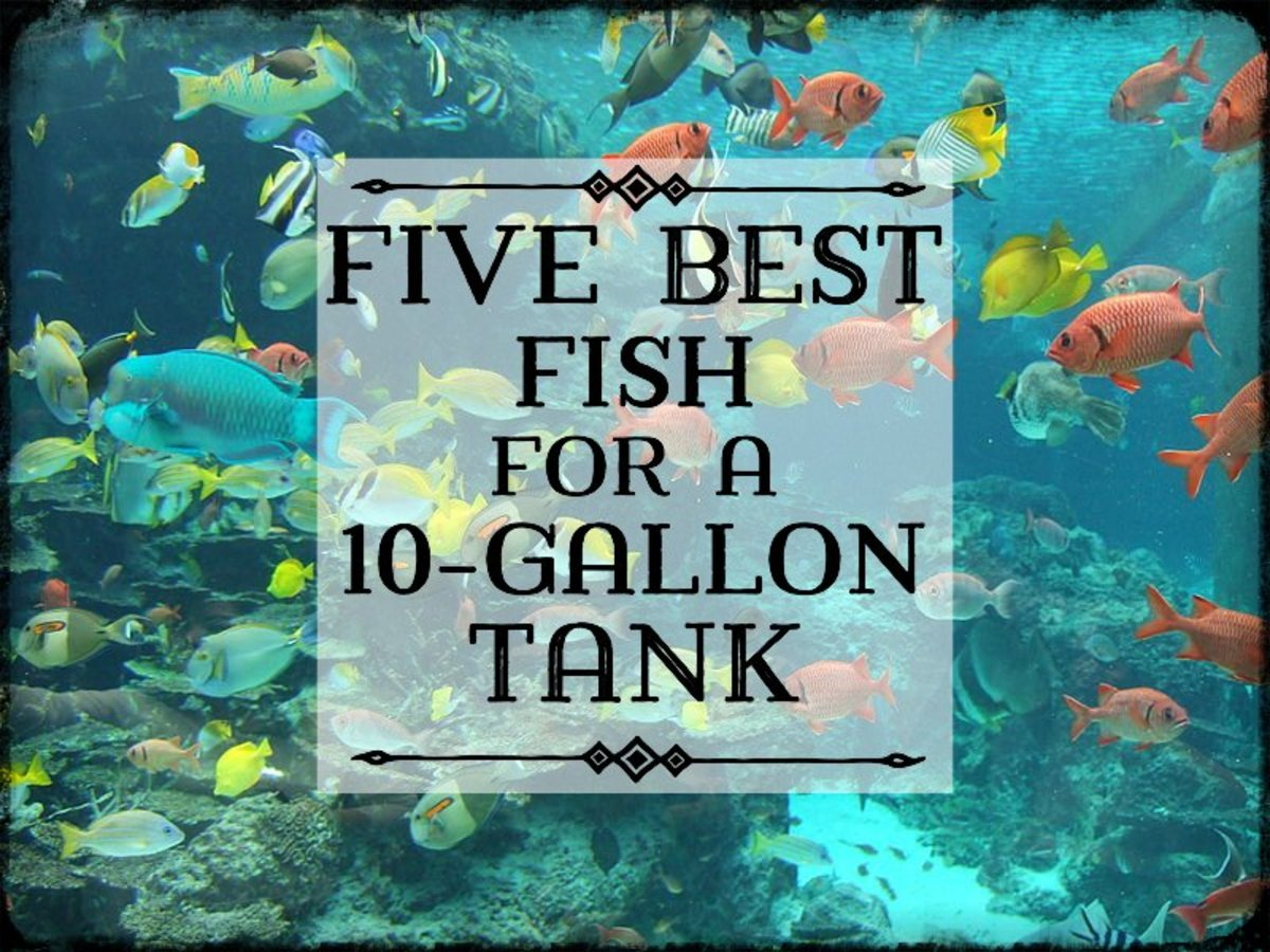 best fish for a 10 gallon tank setup