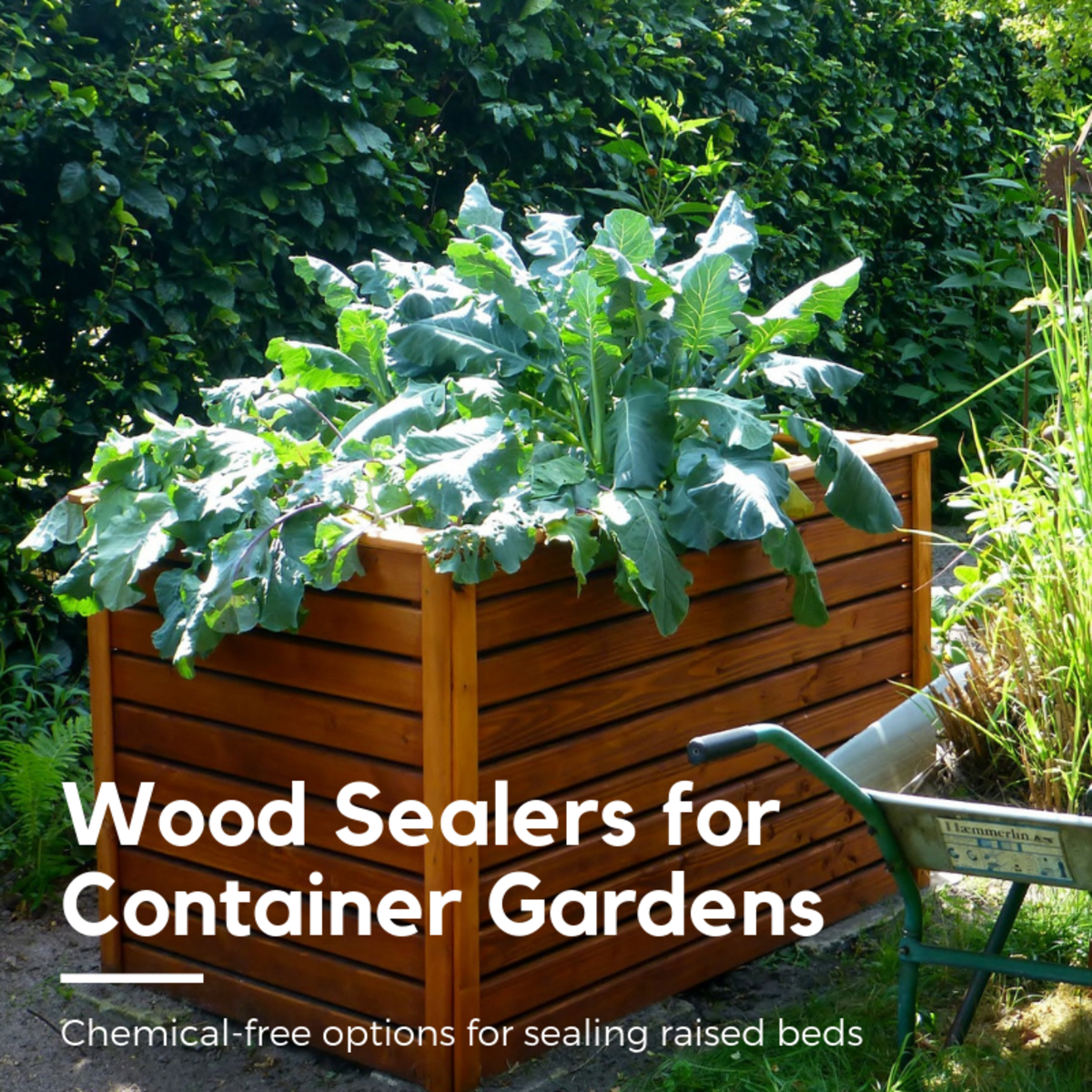 This article will break down five of my favorite safe, chemical-free options for wood sealing container gardens and raised beds.