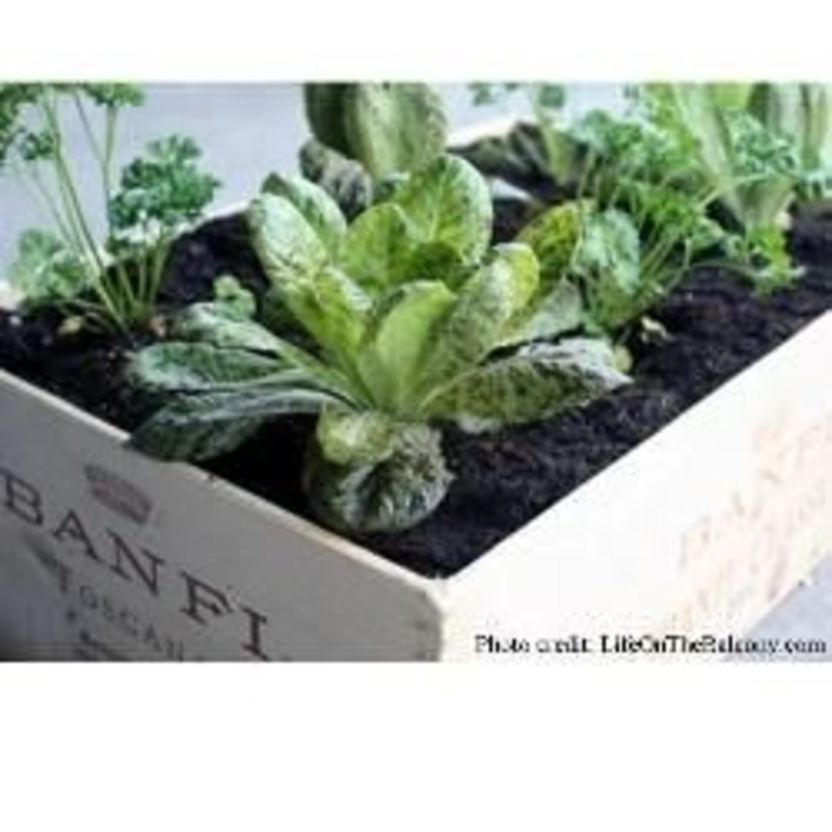 Dress Up Your Garden With a Wine Crate Herb Box