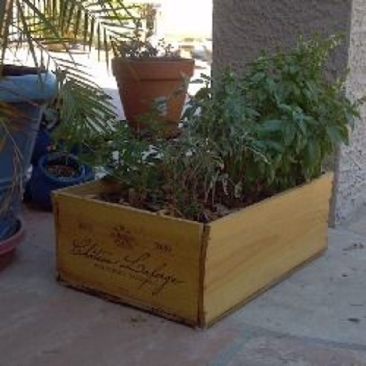Give your herb box adequate water and nutrients.