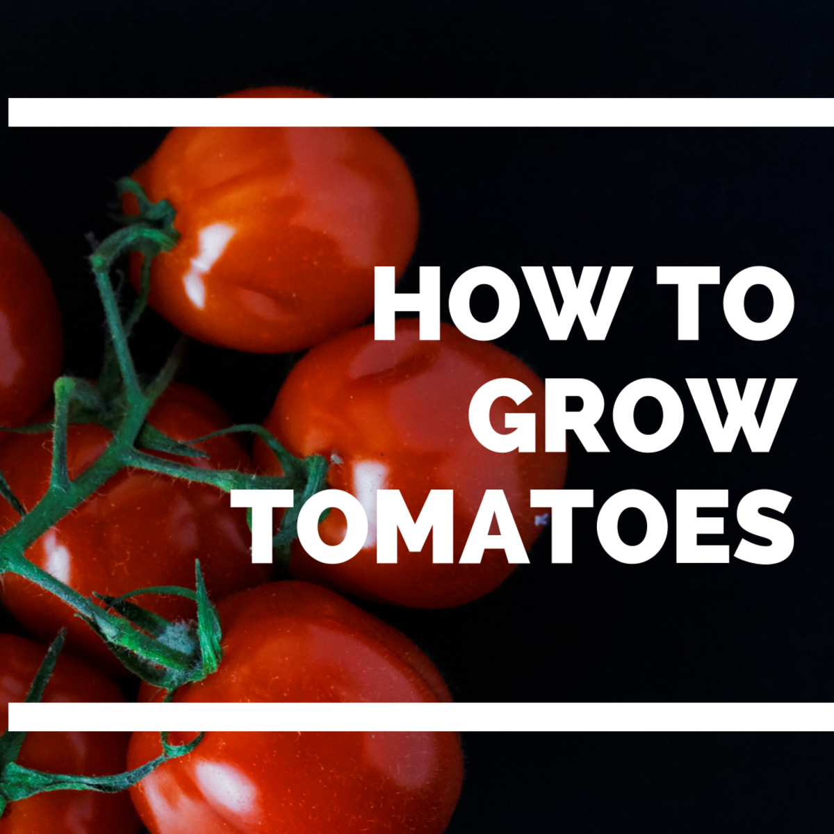 How to Grow Tomatoes Anywhere—Even in the Low Desert | Dengarden