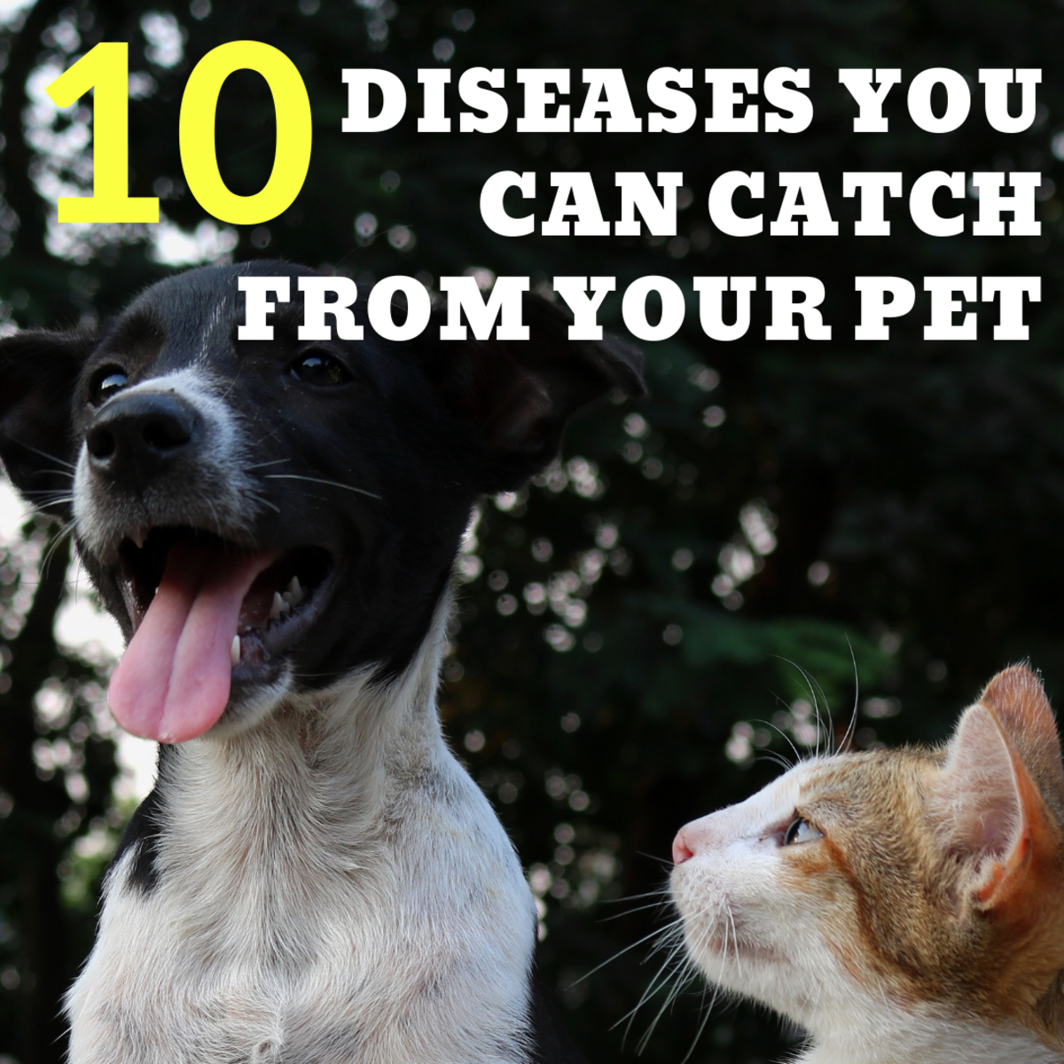 10 Diseases You Can Acquire From Your Pet
