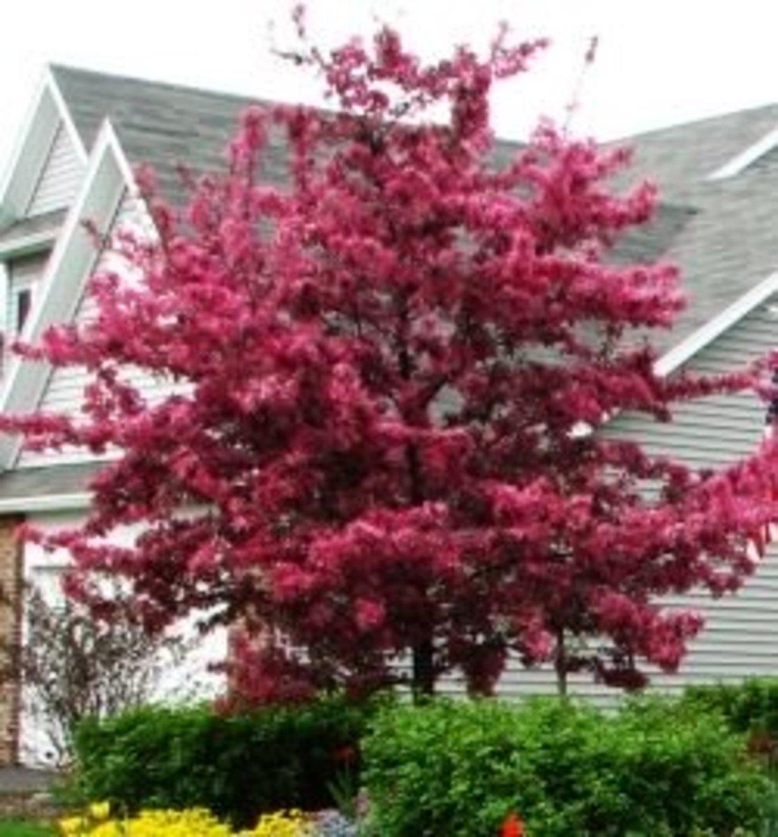 Flowering Crabapple Trees - Four Seasons of Beauty
